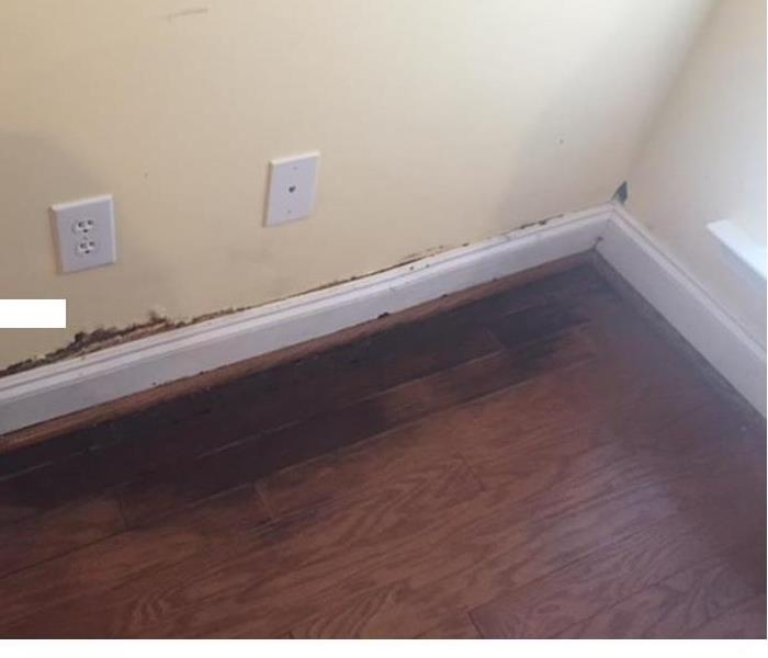 Residential Mold Before