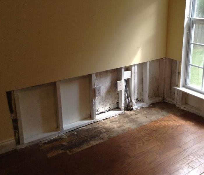 Residential Mold After